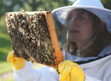 Bee keeping course 5
