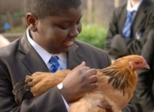 child with hen